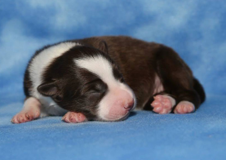 1 pup female